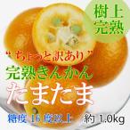 ちょっと訳あり 家庭用 金柑 きんかん たまたま 宮崎県産 光センサー 糖度16度以上 L〜3Lサイズ 1.0kg 樹上完熟