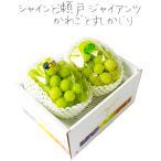 シャインマスカット 晴王 & 瀬戸ジャイアンツ 2房500g×2 贈答 ギフト 葡萄 ぶどう ブドウ プレゼント