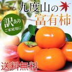 送料無料 訳あり 九度山の富有柿7.5kg 産地厳選 カキ 甘柿 数量限定 和歌山産 採れたて 予約商品