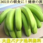 送料無料 365日の朝食に 健康の源 バナナ を大量でお届け!