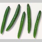 国産 きゅうり キュウリ 胡瓜 1箱 5kg 送料無料