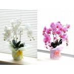 造花の胡蝶蘭★光触媒で脱臭&殺菌★鉢・ラッピング付き