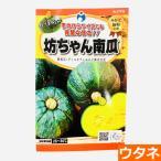坊ちゃんかぼちゃ(種:ウタネ)