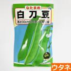 白刀豆(なたまめ)(種:ウタネ)