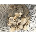 山形県飯豊町産極上のかぬか(ブナハリ茸)塩蔵1キロ 全国送料無料 田舎では正月料理に欠かせません かなり貴重なキノコ レターパック代引き不可