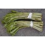 お取り寄せ 山形県産 天然山菜ごぼうアザミの塩漬け 東北関東送料無料 一度は味わいたい山菜