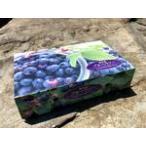 贈答用 お取り寄せ こだわりの完熟冷凍ブルーベリー ギフト1kg 東北関東送料無料 クール便 福島県産みうら農園