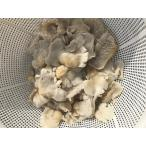 天然物猟師じゃないと採れない超貴重なキノコ 極上本かぬか塩蔵1キロ 全国送料無料 田舎では正月料理に欠かせません  レターパック代引き不可 日時指定不可