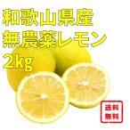 グリーン レモン 無農薬 ノーワックス 和歌山産 2kg箱