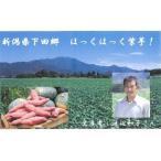 新潟県下田産 ほっくほっく紫芋 5kg
