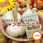 Yahoo!イケダグリーンセンターヤフー店予約販売 お買い得!!野菜種 ニンニク ジャンボニンニクの種 1kg 9月上旬出荷開始