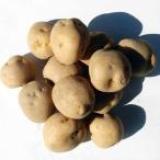 野菜種 種ジャガイモ 馬鈴薯(バレイショ) 北海道産 男爵(ダンシャク) M〜Lサイズ 20kg