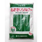 緑肥 ソルガム おおきいソルゴー 1kg カネコ種苗