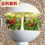 アカリーナ akarina01 Terrara 灯菜 LED水耕栽培器