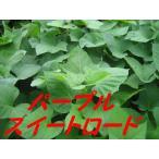 さつまいも苗 ●甘い紫芋 パープルスイートロード 苗 10本 切り苗