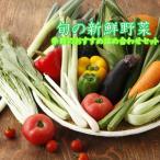 野菜セット  直送野菜 新鮮 採れたて   送料無料 (クール便代込) 千葉・茨城県 農家さん 品質保持のため、本州のみの発送とさせていただきます