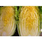 自家栽培品 白菜(生食用)