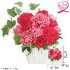 母の日 花束『シャクヤクブーケ5本』 ギフト プレゼント 送料無料 花束 カーネーション