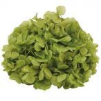 東北花材 TOKA ドライフラワー ソフトあじさい美咲 バジルグリーン 約2.5輪 64260 代引き不可