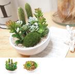 人工観葉植物 消臭アーティフィシャルグリーン サキュレントリフレリウム M 丸型 ( 造花 フェイクグリーン インテリアフラワー )