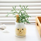 【今だけポイント5倍】フェイクグリーン 人工観葉植物 ファミーユ 消臭アーティフィシャルグリーン ジャック ( 造花 人工植物 観葉植物 )