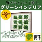 WALL GREEN 3554 グリーンインテリア 造花 グリーンポット 観葉植物 パネル 額縁 インテリアデコ (GR3554)