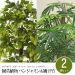 観葉植物 2点セット ベンジャミン&観音竹 下草付き 観葉植物 インテリア 観葉植物 大型 観葉植物