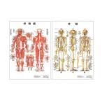 医道の日本社 人体解剖学チャート骨格筋 ポスター 2枚セット(骨格筋・骨格) パネルなし+さらに選べるプレゼント付