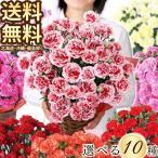 母の日 フラワーギフト 5号カーネーション  お母さん プレゼント 贈り物  おしゃれ お花 (2018年母の日)(代引不可)