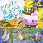 ソーラー フライングバード はちどり ソーラー電源 電池式 ガーデンフラッター トリ 鳥 小鳥 ガーデニング 玄関 ■ 何色の鳥が届くかお楽しみ♪ ■