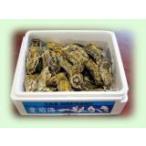 殻付き牡蠣の豊前海一粒かき(Mサイズ3キロ詰)