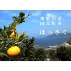 八朔(はっさく) 3kg 和歌山県由良町産 ご自宅用に、ギフト・贈り物にもおすすめです。