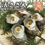 活サザエ(中) 1個 海鮮BBQなど�