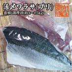 青甘魚, 鰤魚 - 活〆ワラサ(ブリ) 4kg〜4.5kg 調理済  [ワラサ](養殖)