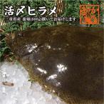 比目鱼 - 活〆 ヒラメ  三重県産(養殖)1枚 800g [魚介類]