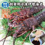 送料無料 刺身用冷凍伊勢海老 大きめサイズ 1kg 3尾入  [伊勢海老] (活〆冷凍)