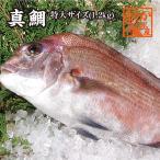 真鯛 - 活〆 真鯛 1枚 約1.2kg(三重県産 養殖)