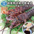 刺身用伊勢海老 凍眠冷凍 活〆 250×20尾 5kg入 普通サイズ[冷凍伊勢海老]