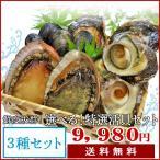 夏の選べる特選活貝3種詰合せ 送料無料 白あわび・黒あわび・さざえ・ムール貝・岩牡蠣・あっぱ貝・大アサリの内お好みの貝を3種類お選びいただけます!
