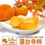 伊勢蓮台寺柿1.8kg送料無料 天然記念物の柿(秋季限定)(完熟柿)