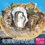 送料無料 浦村牡蠣70個 殻付き牡蠣 (牡蠣ナイフ・片手用軍手付き) 三重県鳥羽産(加熱用)