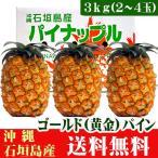 沖縄石垣島産ゴールド(黄金)パイン3kg(2〜4玉) 送料無料