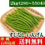 インゲン(すじなしいんげん)生野菜 2kg 業務用 送料無料