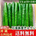 朝採れ!きゅうり 2kg(16〜24本) 石垣島産 送料無料