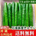 きゅうり 3kg(16〜36本) 石垣島産 送料無料
