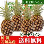 石垣島ピーチパイン 3kg 3〜5玉 送料無料