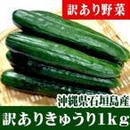 きゅうり 1kg(8〜12本) 朝採り 石垣島産