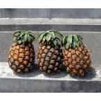 木瓜 - ピーチパイン 約3kg(2〜4個)沖縄・石垣島より直送