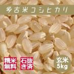 米 玄米 5kg 多古米 コシヒカリ 29年産 綺麗仕上 本州四国 送料無料 精米無料 紙袋