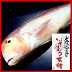 真鲷 - あまだい(アマダイ・鯛)甘鯛旬干 150g前後産地直送の高級魚の干物